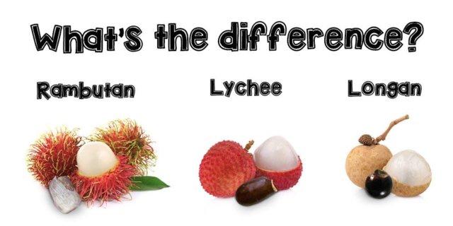 Differences between rambutan, lychee, longan