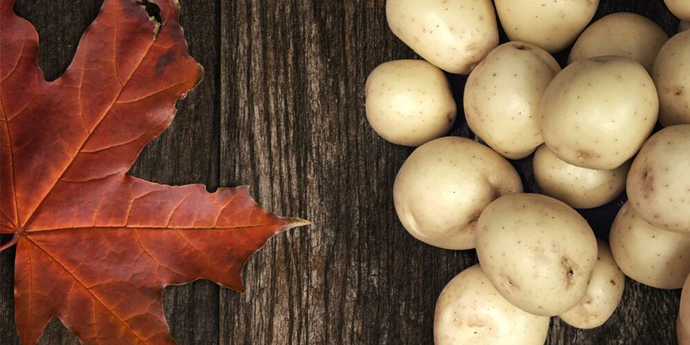 White potatoes with Canadian maple leaf
