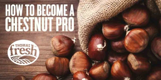 Become a chestnut pro