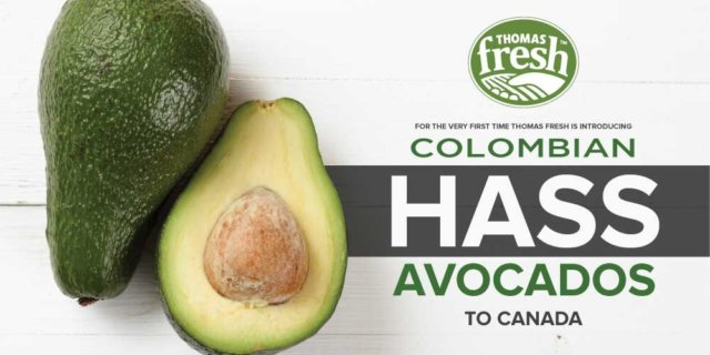 Colombian hass avocados coming to Canada