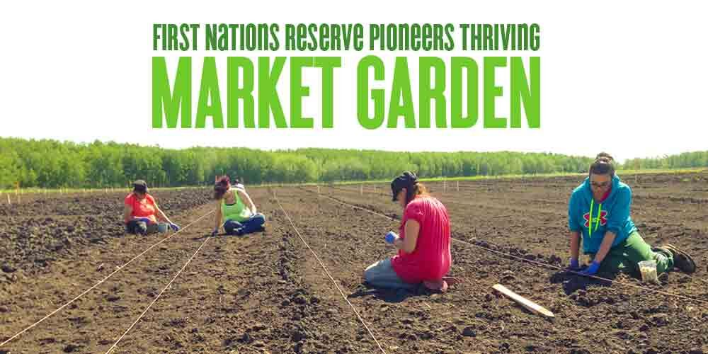 First nations reserve market garden planting