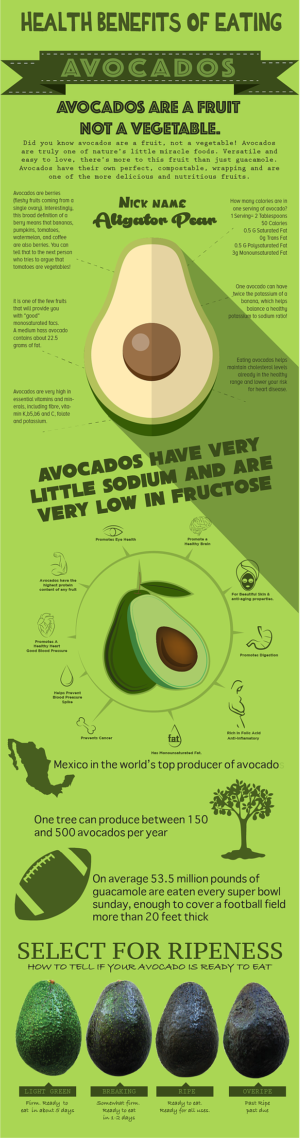 Avocadoes Infographic - Thomas Fresh