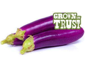 Chinese Eggplant - Grown in Trust