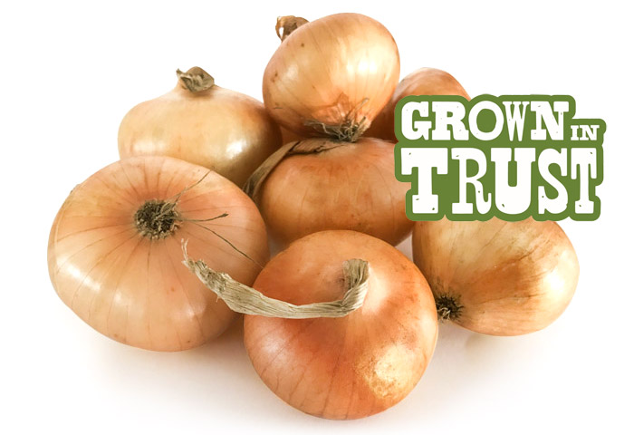 Cipollini Onions - Grown in Trust