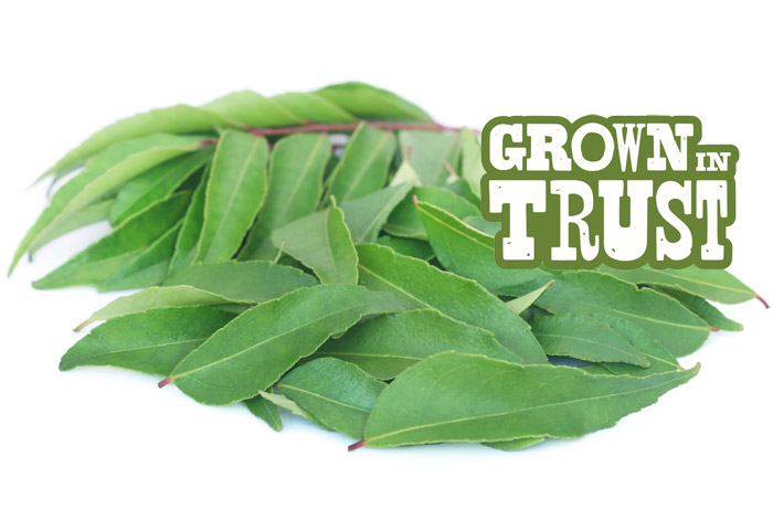 Curry Leaves - Grown in Trust