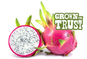 Dragon Fruit - Grown in Trust