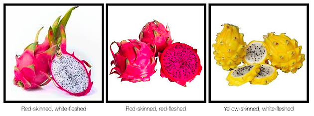 Dragon fruit variations