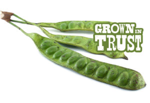 Gawar beans - Grown in Trust