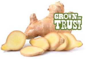 Ginger - Grown in Trust