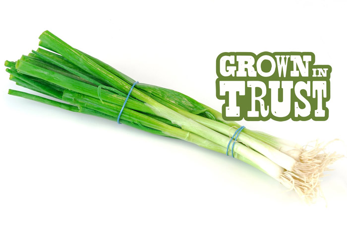 Green Onions - Grown in Trust