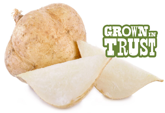 Jicama - Grown in Trust