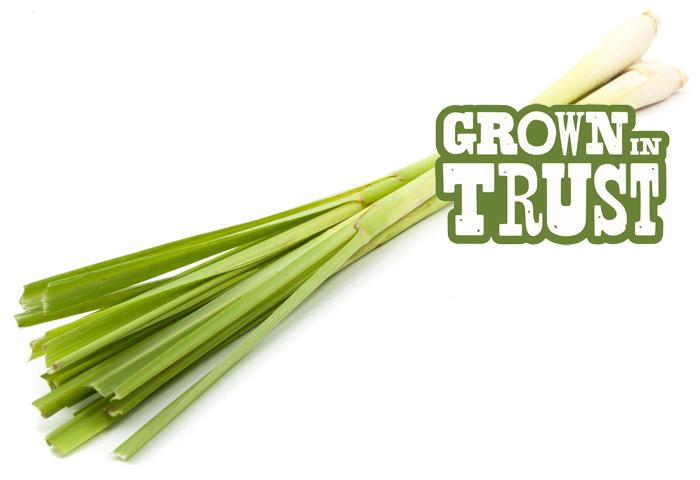 Lemongrass - Grown in Trust