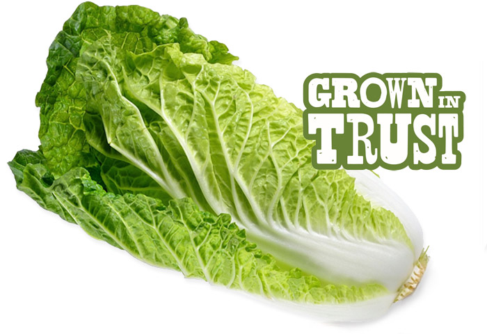 Nappa Cabbage - Grown in Trust