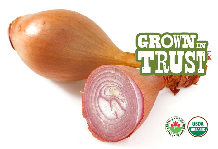 Organic Shallots - Grown in Trust