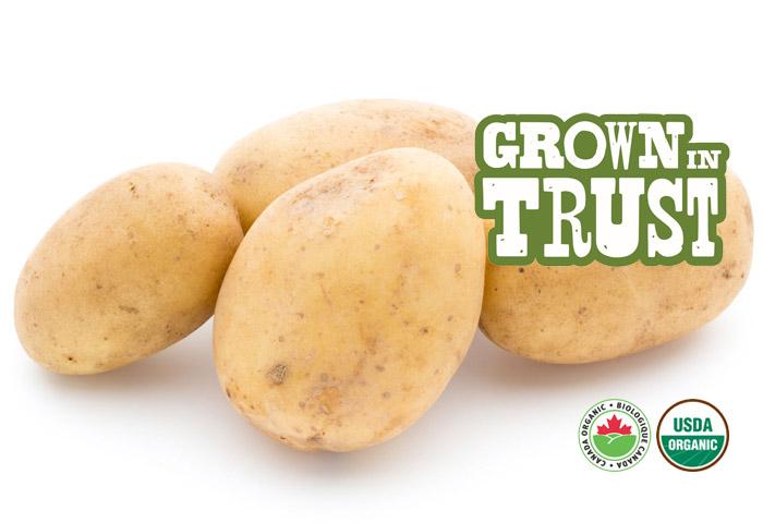 Organic White Potatoes - Thomas Fresh