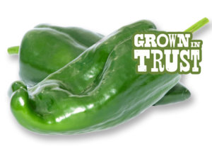 Poblano peppers - Grown in Trust