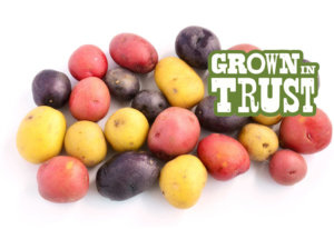 Rainbow Potatoes - Grown in Trust