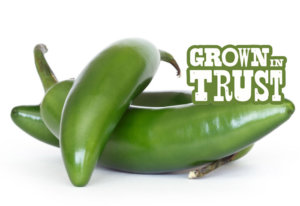 Serrano peppers - Grown in Trust