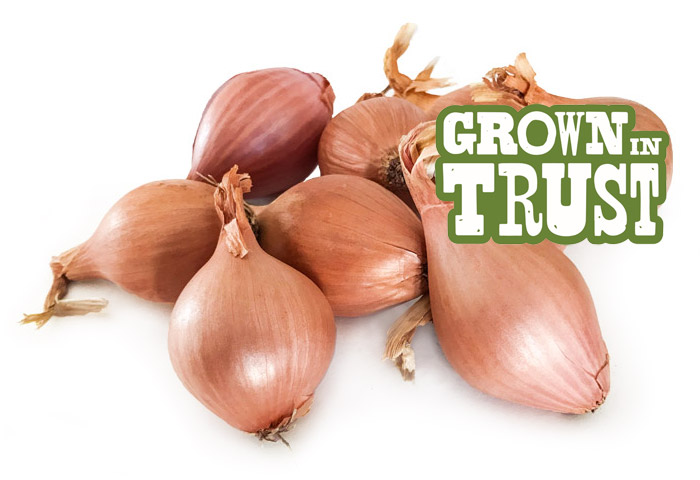 Shallots - Grown in Trust