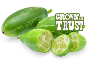 Tindora - Grown in Trust
