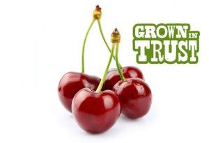 Thomas Fresh Cherries - Grown in Trust
