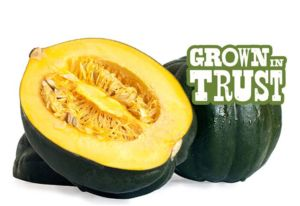 Thomas Fresh Acorn Squash - Grown in Trust