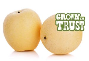 Thomas Fresh Asian Pear - Grown in Trust