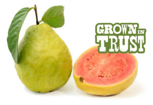 Thomas Fresh Guava - Grown in Trust