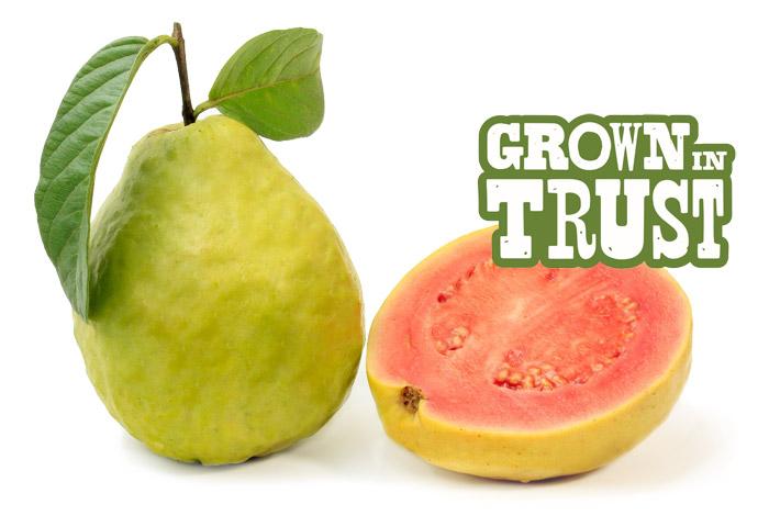 Thomas Fresh Guava - Grown in Trust
