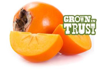 Thomas Fresh Persimmon Fruit